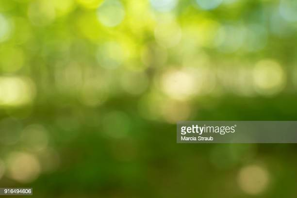 greenery - environmental conservation stock photos and pictures