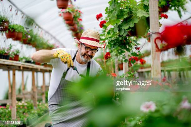 greenhouse florist - one man only stock pictures, royalty-free photos & images