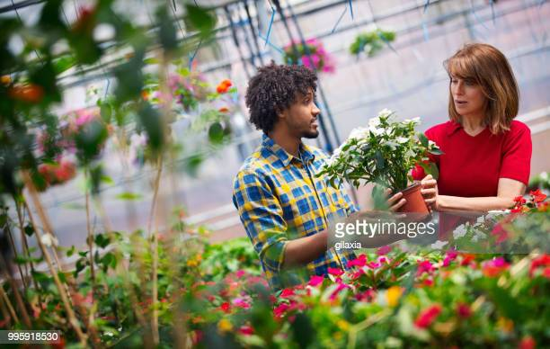 greenhouse flower shop - red roses garden stock pictures, royalty-free photos & images