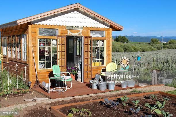 Greenhouse garden in summer