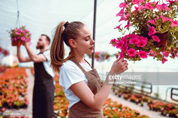 greenhouse gardener couple inspecting flower quality - aleksandar georgiev stock photos and pictures