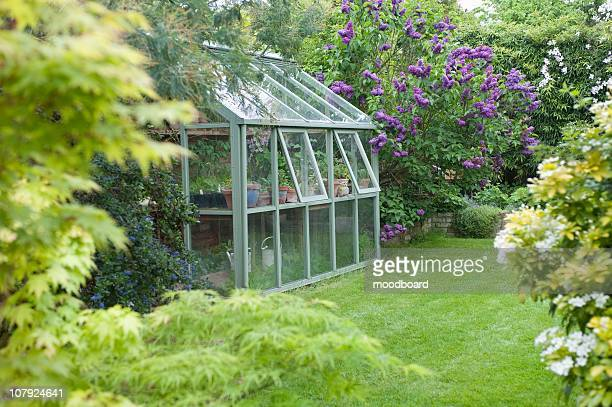 greenhouse in back garden with open windows for ventilation - streatham stock pictures, royalty-free photos & images
