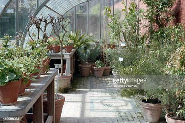greenhouse in botanical garden leuven - leuven stock pictures, royalty-free photos & images