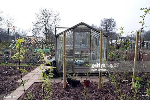 greenhouse in organic community garden - arnhem stockfoto's en -beelden