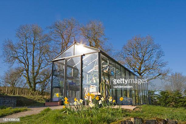 Greenhouse In Spring Sunshine