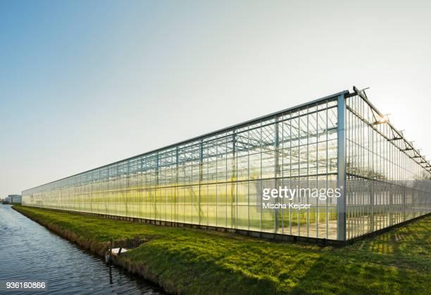 greenhouse in westland, area with the highest concentration of greenhouses in netherlands - gewächshäuser stock-fotos und bilder