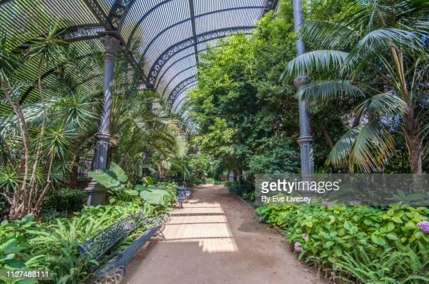 greenhouse interior in ciutadella park - tropische boom stockfoto's en -beelden