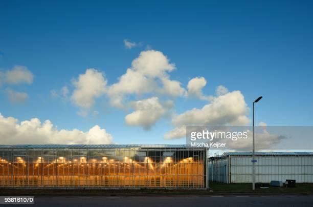 Greenhouse lit by LED lights, Netherlands