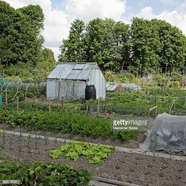 Greenhouse on a Dutch vegetable garden in summer