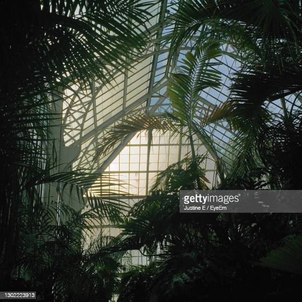 greenhouse - asheville stock pictures, royalty-free photos & images
