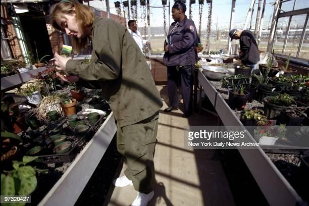Greenhouse program at Rikers Island prison