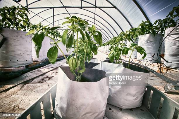 greenhouse with crops on an organic farm - robb reece stock pictures, royalty-free photos & images