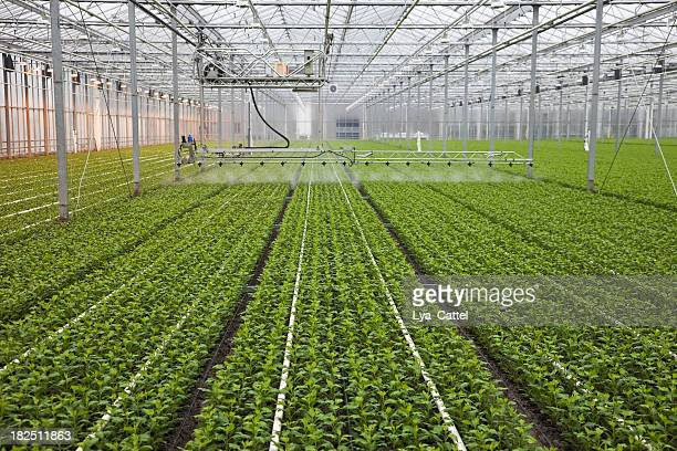 greenhouse # 19 xxxl - sprinkler system stock pictures, royalty-free photos & images