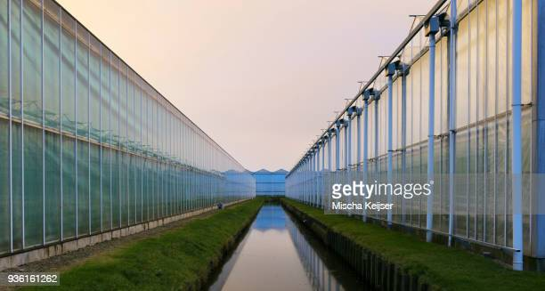 Greenhouses at dusk, in Westland, area with the highest concentration of greenhouses in Netherlands
