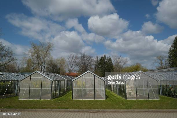 Greenhouses containing variants of cabbage plants stand at the Leibnitz Institute of Plant Genetics and Crop Plant Research on April 22, 2021 in...