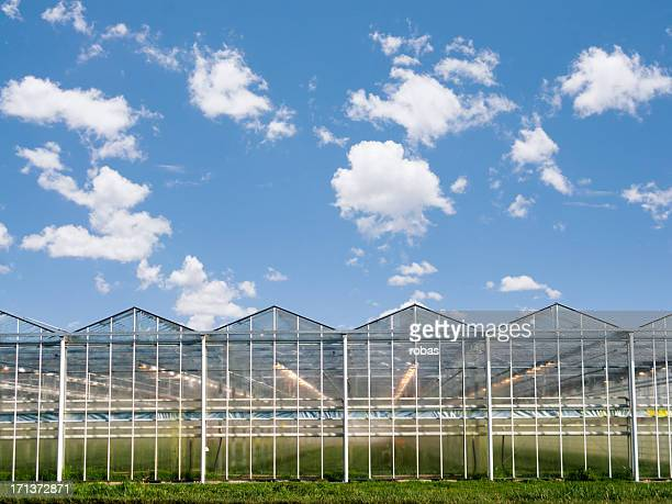 Greenhouses in  a row.