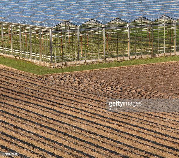 greenhouses in ploughed field - オランダ リンブルフ州 ストックフォトと画像