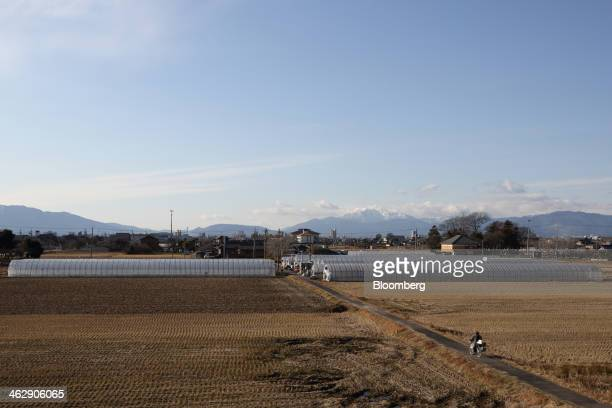 Greenhouses stand at Okuda Farm in Hashima, Gifu Prefecture, Japan, on Tuesday, Jan. 14, 2013. The farm this month began harvesting strawberries that...