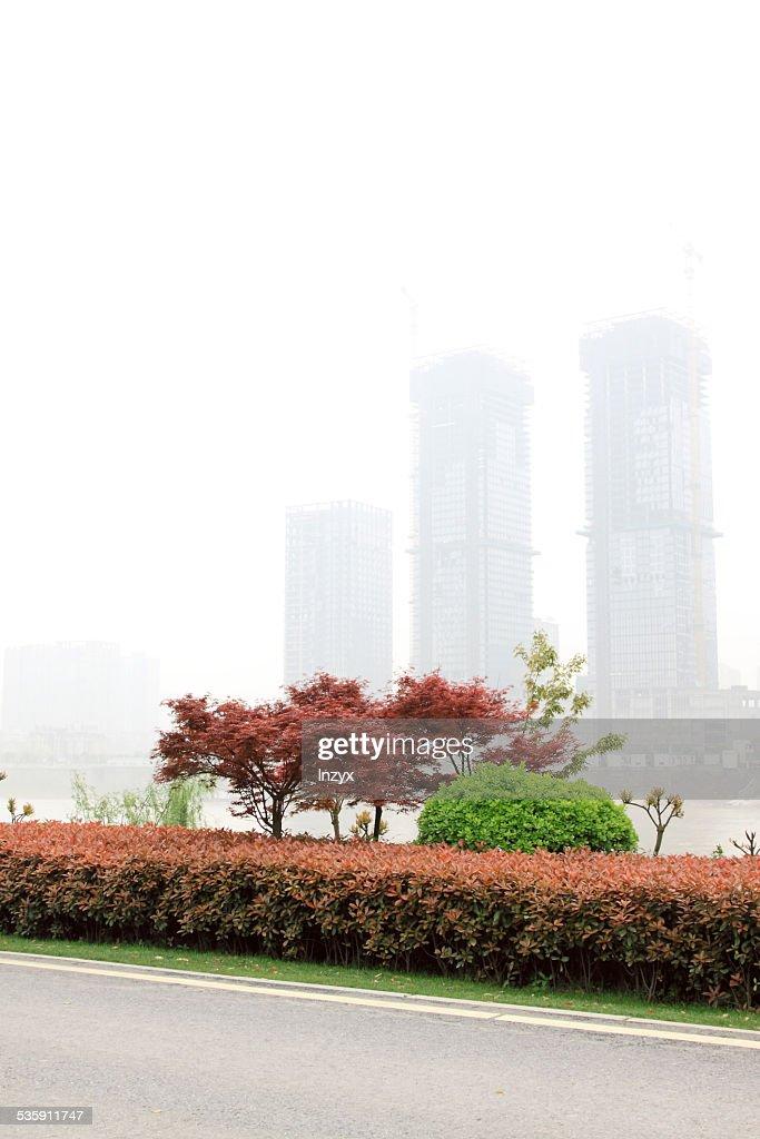 Dotar árbol en la calle, en el sur de China : Foto de stock