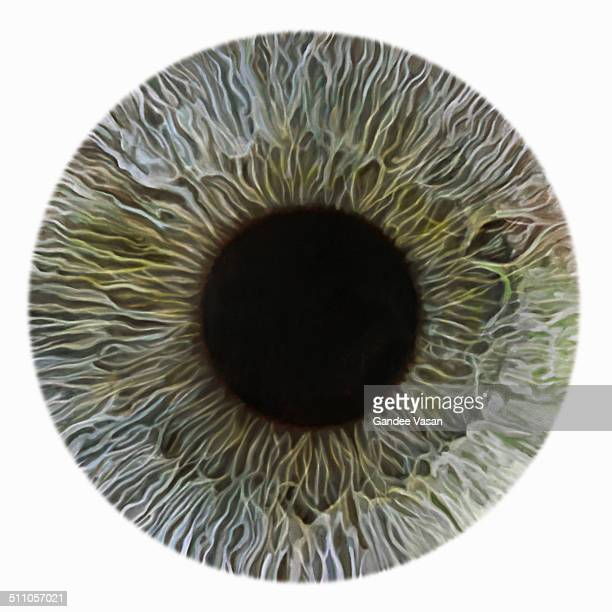 greeniris - green eyes stock pictures, royalty-free photos & images