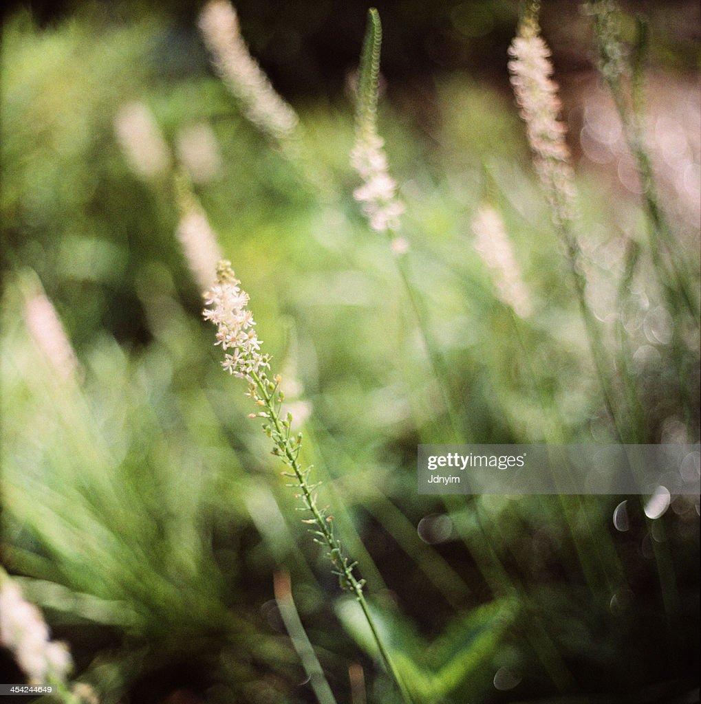 Greenkeh : Stock Photo