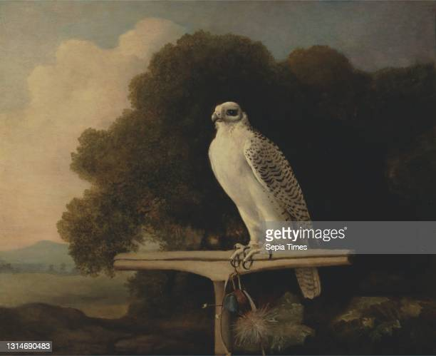 Greenland Falcon, George Stubbs, 1724–1806, British beeswax on panel, Support : 32 x 39 inches , animal art, bells , exoticism, falcon , field,...