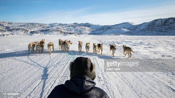 greenland in winter - 犬ぞりに乗る ストックフォトと画像