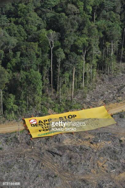 Greenpeace activists display a large banner on August 5 2010 with a message 'APP stop destroying tiger forest' at the PT Tebo Multi Agro concession...