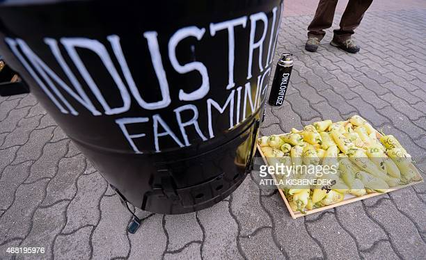 Greenpeace activists protest against industrial farming and selling toxic vegetables such as paprika in Hungary in front of a supermarket building in...