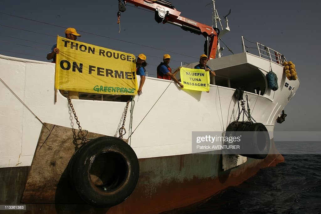 Greenpeace operation to save the last Bluefin Tunas in the Mediterranean Sea On June 20, 2007. : Nieuwsfoto's