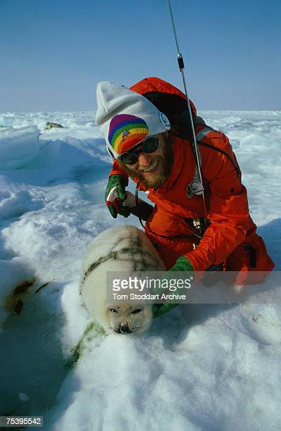 A Greenpeace protestor in the Gulf of St Lawrence sprays a baby seal with green dye to render its fur useless to Canadian seal hunters 1st March 1982...