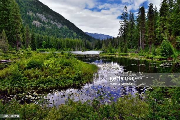 greens of leaves and water reflections off howard lake - pacific crest trail stock pictures, royalty-free photos & images