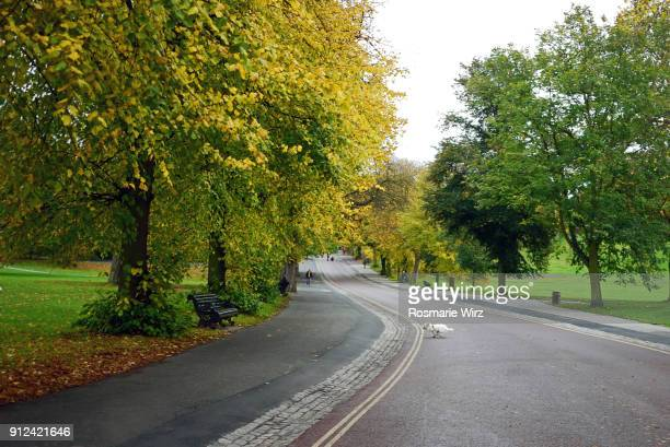 Greenwich park avenue lined with autumn lime trees