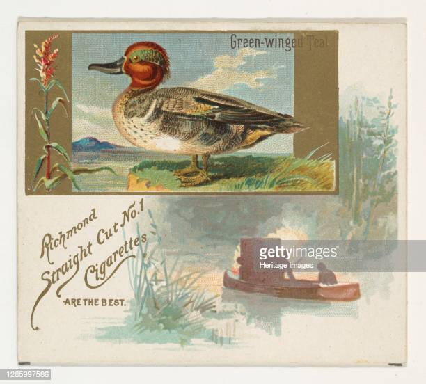 Green-winged Teal, from the Game Birds series for Allen & Ginter Cigarettes, 1888-90. Artist Allen & Ginter.