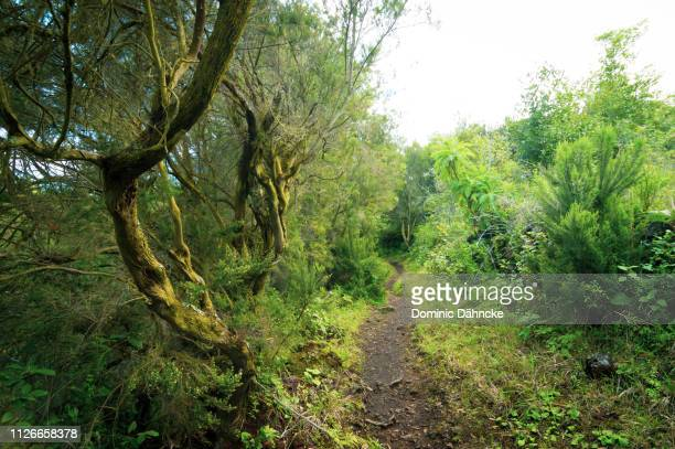 Greet path to hike in La Palma island, Canary Islands (Spain)