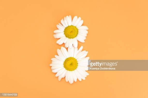 greeting card international women's day on march 8th. branches of mimosa in the form of number eight - number 8 stock pictures, royalty-free photos & images