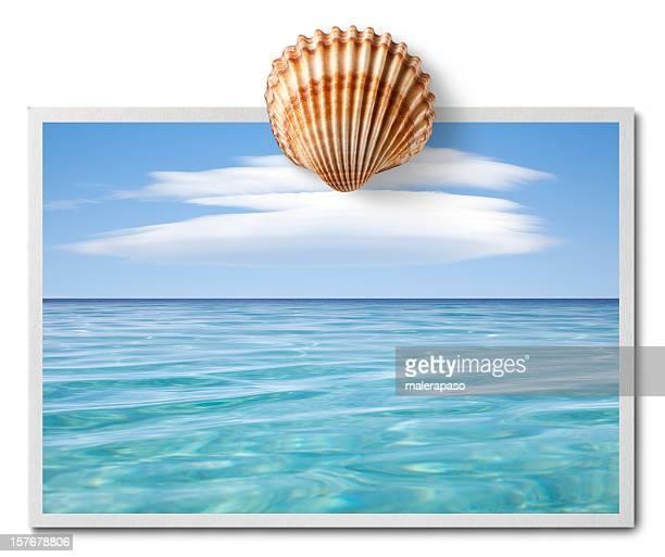 Grüße aus dem Meer. Postkarte mit shell.