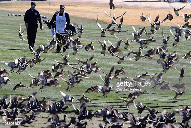 Greg Chalmers of Australia walks with his caddie toward a flock of birds on the 11th hole fairway during the first round of the Waste Management...