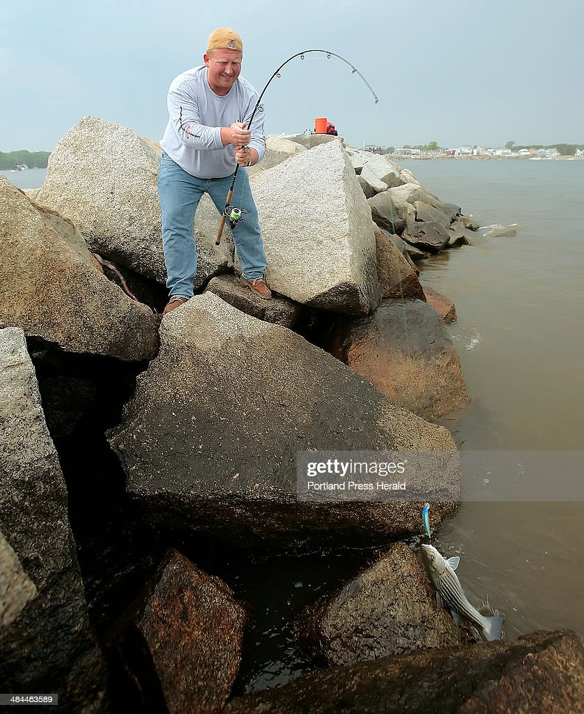 Fred Valentine Of New York Pulls In A Striper While Fishing From The Jetty  In Camp