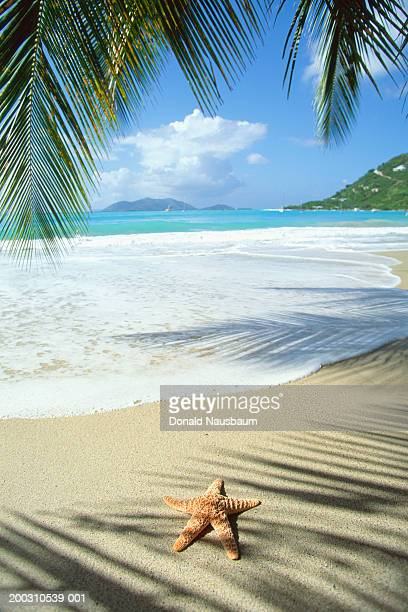Grenada, starfish and shadows of palm trees on beach