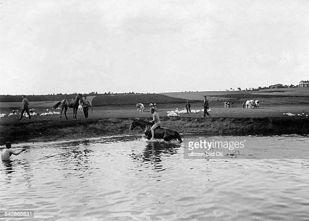 Grenzstation an der deutschrussischen Grenze Nackte Kosaken baden ihre Pferde im Fluss undatiert vermutlich um 1910Foto Conrad HünichFoto ist Teil...