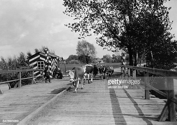 Grenzstation an der deutschrussischen Grenze Russische Bauern dürfen ihre Kühe auf deutscher Seite weiden das Vieh wird über die Grenze getrieben...