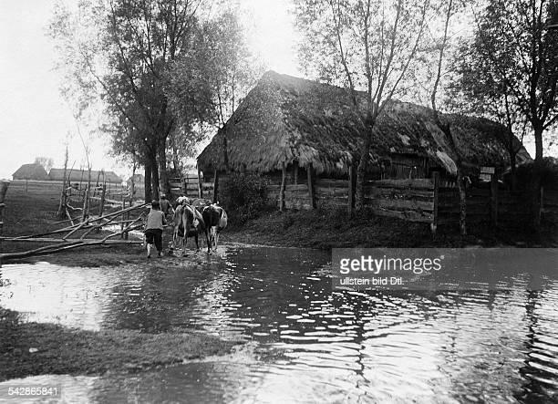 Grenzstation an der deutschrussischen Grenze Russische Bauern dürfen ihre Kühe auf deutscher Seite weiden ein Hütejunge treibt die Kühe durch die...