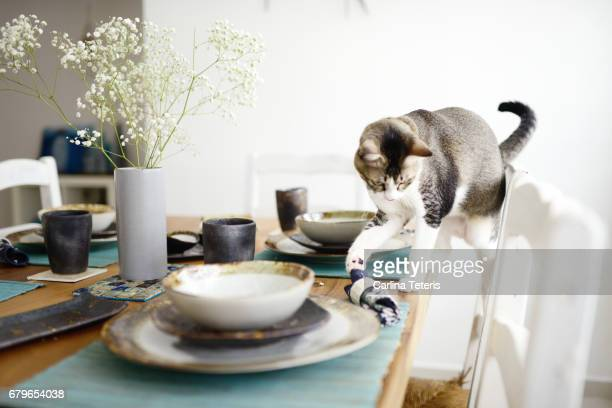 grey and white cat pushing a napkin off a set table - vernieling stockfoto's en -beelden