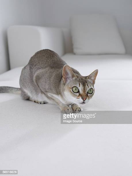 Grey cat on a white sofa