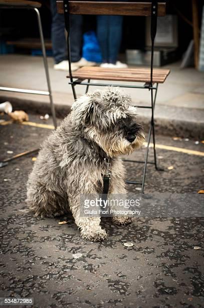 Grey dog in Portobello Road