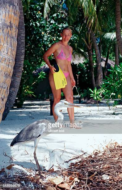 Grey Heron and Tourist at Beach Ardea cinerea Maldives Indian Ocean Medhufushi Meemu Atoll