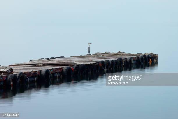 grey heron (ardea cinerea) perching on pier, yamanashi prefecture, japan - miyamoto y ストックフォトと画像