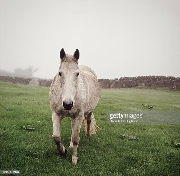 Grey horse in field