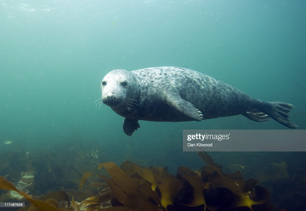 Visitors Enjoy The Wildlife At The Farne Islands : ニュース写真